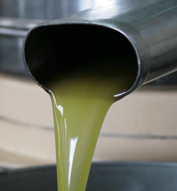 Olivenöl grünes Gold